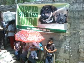 Campaña de esterilización favorece a más de 140 animales en el Estado de México