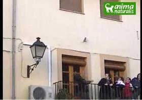 El Puig vuelve a lanzar ratas pese a la prohibición del Ayuntamiento