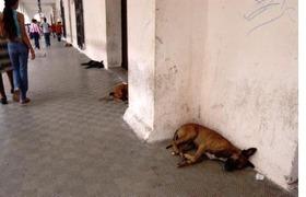 Cumbre de las Américas: ¿Qué harán con los perros en Cartagena?