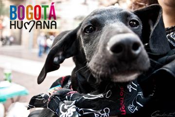 Nace programa 'Bogotá Humana con la fauna doméstica'
