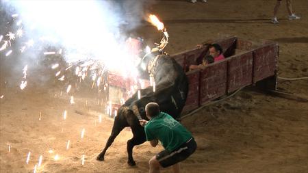 El Partido Animalista y AnimaNaturalis interpusimos 11 denuncias contra los correbous de 2011