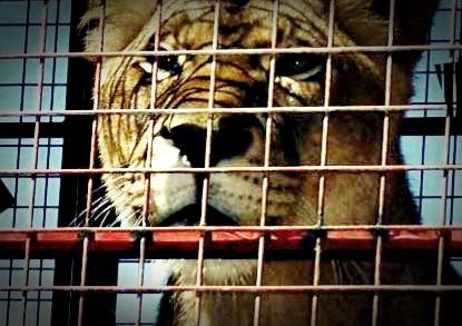Paraguay prohibe los circos con animales silvestres