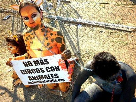 ¡Zapopan es el primer municipio mexicano que prohíbe circos con animales!