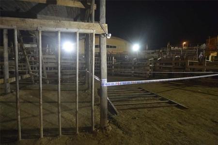 AnimaNaturalis denunciará al Ayuntamiento de Deltebre por la muerte de un hombre en un correbou
