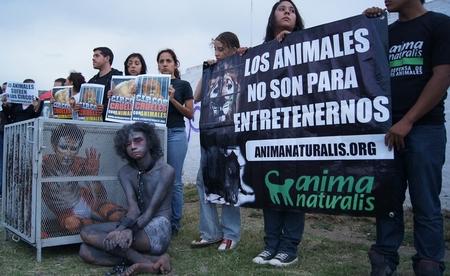 """¡Exitosa protesta de AnimaNaturalis frente al """"Circo Franzatti"""" en Durango!"""