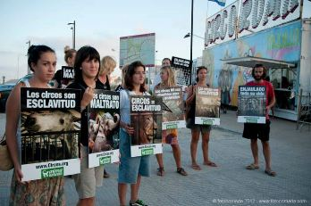 ¡Exitosas protestas de AnimaNaturalis frente al Circo Roma en Ibiza!
