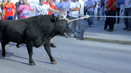 Juicio por agresión de un taurino de Alcanar a activistas de AnimaNaturalis
