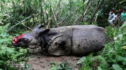 rhinoceros tue dans un zoo