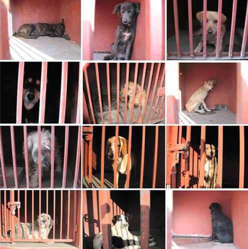 ¡Exijamos justicia para los perros señalados como causantes de cuatro decesos!