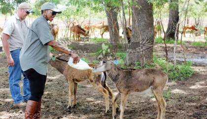 Zambia prohíbe la caza