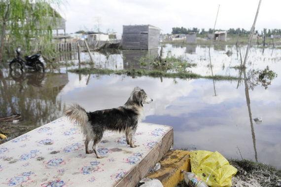 Más de 25 mil animales                                      damnificados tras el temporal en                                      Argentina