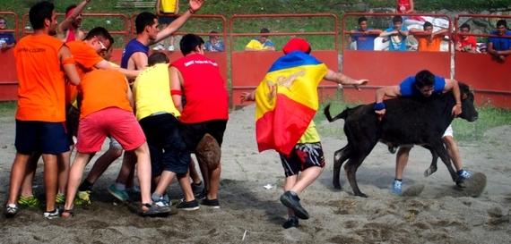 Brutalidad y acoso a las vaquillas de Encamp (Andorra)