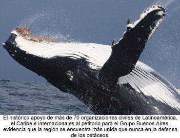 AnimaNaturalis y otras 70 ONGs unidas en la defensa de las ballenas
