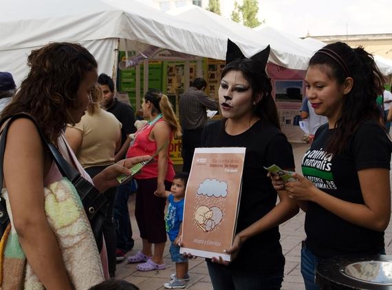 Conmemoramos el Día Mundial de los Animales Sin Hogar en Durango