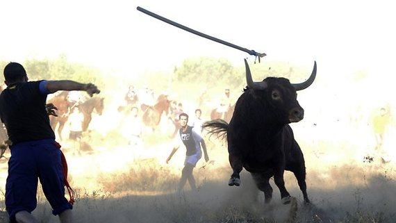 Vulcano, la última víctima del polémico Toro de la Vega en Tordesillas