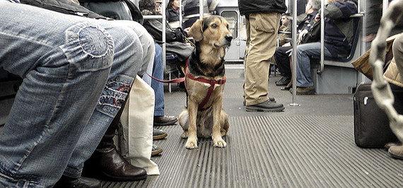 Los perros podrán viajar en el                                      metro de Barcelona