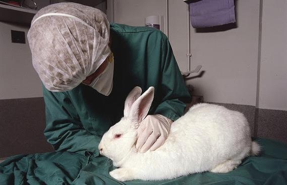 China quiere poner fin gradualmente a la experimentación en animales
