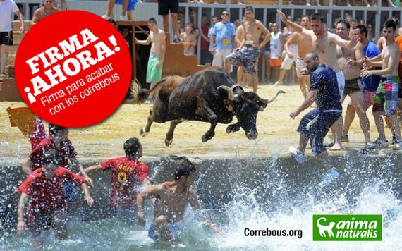 Muere desnucada una vaca en los Bous a la Mar de Moraira ¡Protesta ya!