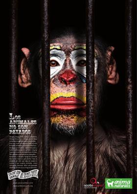 Alcalde de la ciudad de Guatemala prohibe los circos con animales