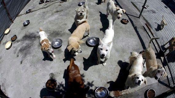 Un amparo podría salvar la vida de animales en antirrábico