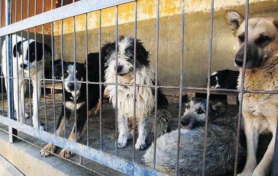 ¡Se suspende sacrificio de animales en antirrábico de Coyoacán!