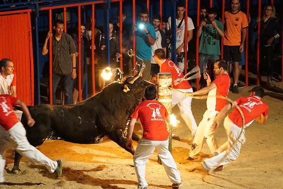 Sancionan a Sant Jaume d´Enveja por unos toros embolados denunciados por AnimaNaturalis