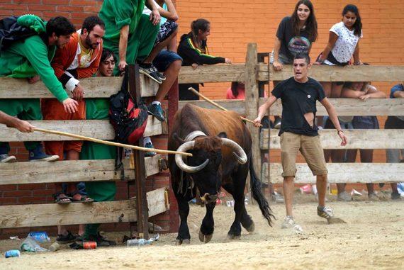 AnimaNaturalis pide al Ayuntamiento del Morell que paralice los correbous ilegales de las Fiestas Mayores