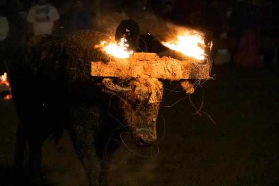 Durante más una hora y hasta caer agotado, el Toro Jubilo sufrió un calvario en Medinaceli