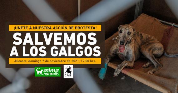 ¡No puedes faltar a nuestra acción por la defensa de los galgos en Alicante!