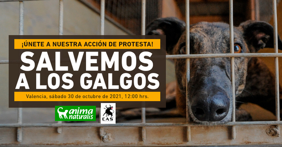 ¡Asiste a nuestra acción por la defensa de los galgos en Valencia!