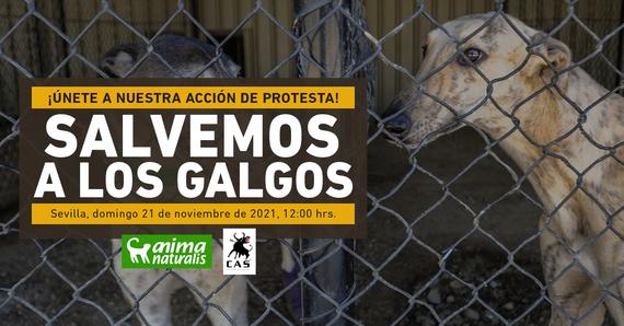 ¡Asiste a nuestra acción por la defensa de los galgos en Sevilla!