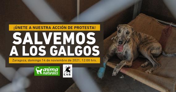 ¡Asiste a nuestra acción por la defensa de los galgos en Zaragoza!