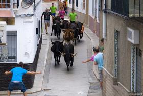 Ayúdanos a que no muera otro toro en Petrés, ¡protesta ya!