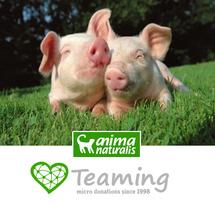 ¡Ayuda a los animales por sólo                                      1€ al mes!