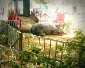 ¡Carta de                                            protesta al Ayuntamiento de                                            Gandía para que no permita los                                            circos con animales!