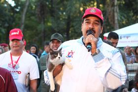 Gobierno de Venezuela lanza Misión Nevado para la atención de la fauna abandonada