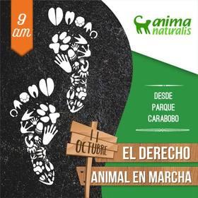 Caracas prepara gran movilización en defensa de los derechos de los animales