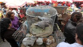 Zamora trabaja para erradicar compra-venta de animales en la vía pública