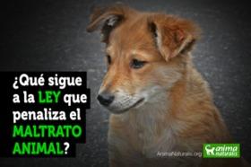 ¿Qué sigue a la ley que penaliza el maltrato animal?