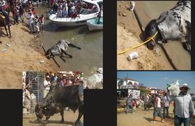 "¡No al ""embalse de toros"" en Tlacotalpan!"