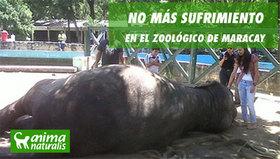 ¡Actúa ya! Por la cancelación de traer nuevos animales al zoo de Maracay