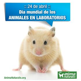 Denunciaremos la experimentación en animales con acto mediático