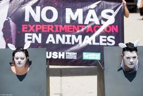 AnimaNaturalis y LUSH realizan impactante acción contra la experimentación animal