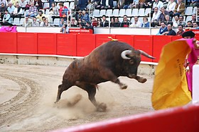 Una respuesta a los argumentos contra la iniciativa para prohibir entrada de menores a corridas de toros en San Luis Potosí