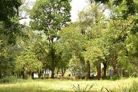 AnimaNaturalis: Tercer interviniente en defensa de 269 árboles del barrio Belén (La Mota), Medellín