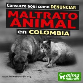 Formatos-guía para denunciar el maltrato animal en Colombia