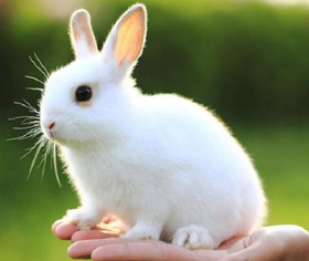 ¡Australia prohíbe las pruebas en animales para productos cosméticos!