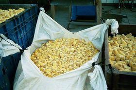 Productores de huevo en Estados Unidos acabarán con la cruel eliminación de pollos macho