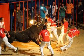 AnimaNaturalis obtiene imágenes decisivas para prohibir los toros embolados