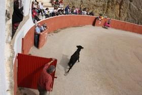 AnimaNaturalis detiene un espectáculo ilegal con vaquillas en Catalunya